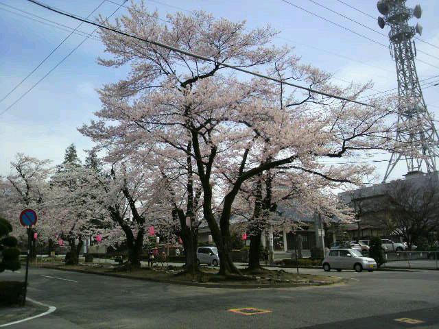 春が来ました